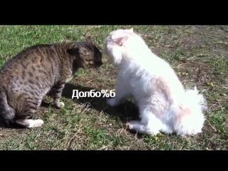 Кот матерится во время разборки с другим котом, угар)