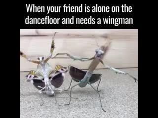 Id prolly be his wingman