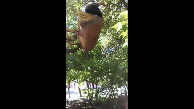 В Тюмени добрый тракторист помог снять с дерева кошку, которая несколько часов мяукала на весь двор