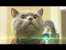Котик Мурзик Здесь так красиво я котик молодой