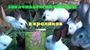 Витаминная трава Иван Чай (Кипрей) для людей и кроликов