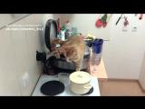 Наглый кот ссыт в мультиварку (ору)