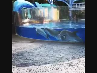 Dolphins-Watching-Squirrels.mp4