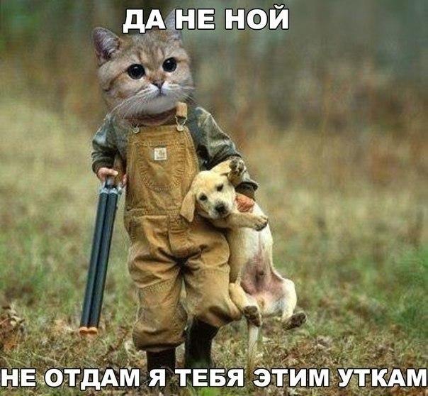 Кот и собака юмор