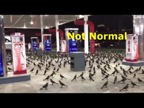 Video Of Birds Flipping Out In Houston Dallas Great Barrington, MA, Here's Why
