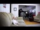 ПРИКОЛЫ С ЖИВОТНЫМИ, приколы с собаками подборка _ FUN WITH ANIMALS, funny dogs