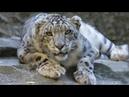 Different seizures of the Animals are dangerous scenes | Animals masti
