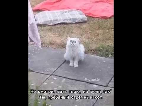 Эй не смотри мать твою на меня так! Ты грёбаный стремный кот