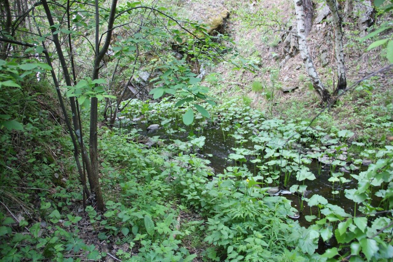 Речка Межовка в конце мая - тихий спокойный ручеёк (04.07.2014)