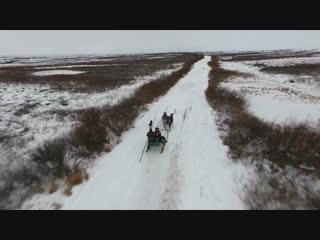 Бескрайняя тундра и северные олени (НенецкийАО)