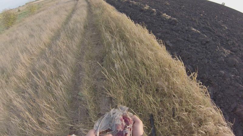 Охота на куропатку дратхааром.