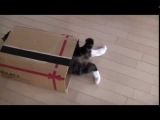 Кот в коробке Прикол Funny cat in the box