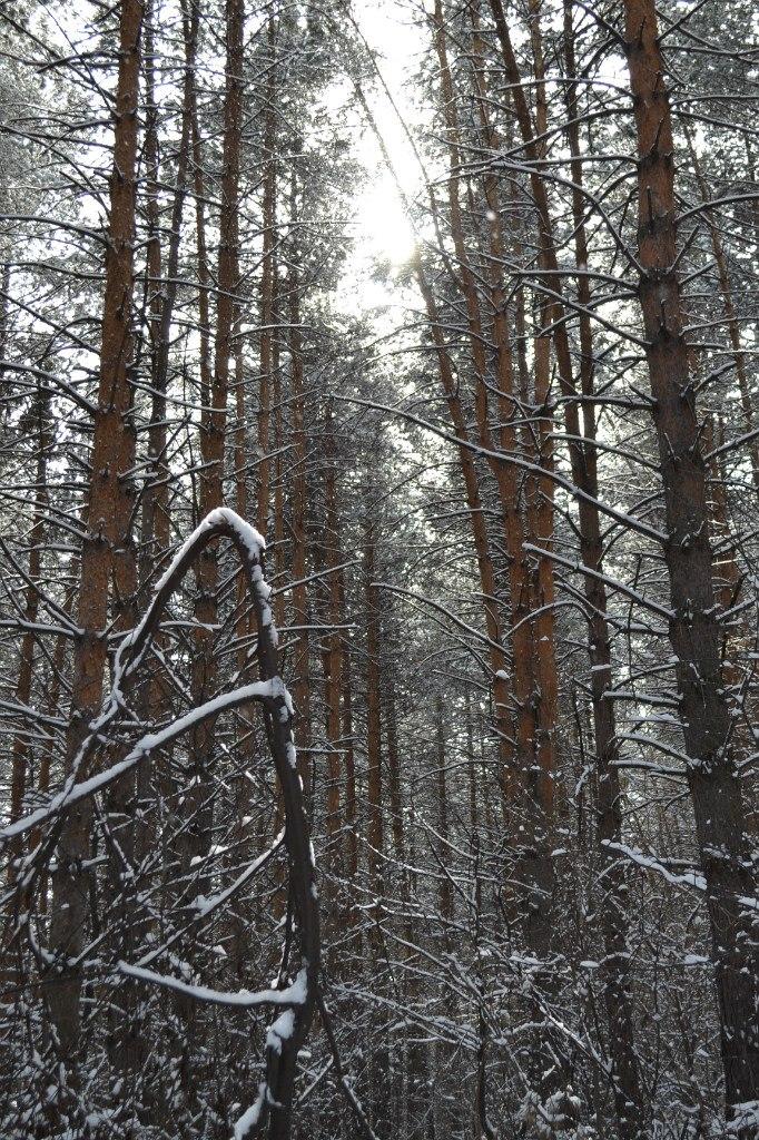 Зимний лес Горного Алтая
