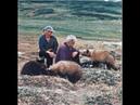 Walking with Giants - The Grizzlies of Kamchatka Siberia