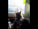 ежик и кот у окна