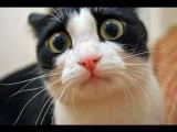 Эти забавные кошки (Часть 4)