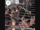 Собаки в заключении АКУЛА