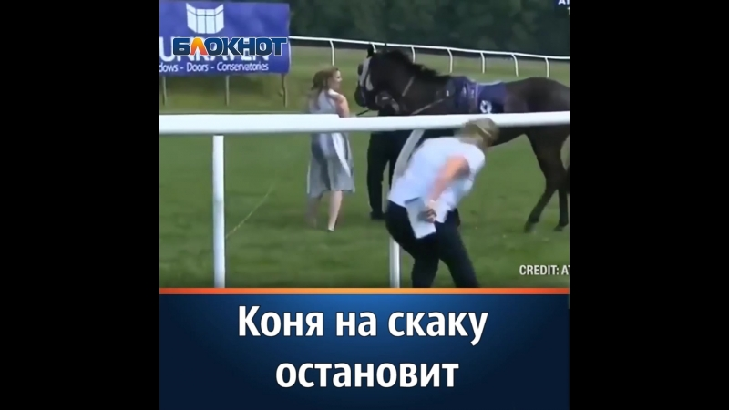 Удаль и отвагу проявила британская журналистка Хейли Мур которая ухватила несущуюся лошадь за поводья и утихомирила животное