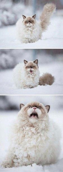 Коты, заслуживающие Оскар: