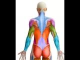 Укрепление мышц спины важно для формирования красивой осанки, так как сильные мышцы спины поддерживают позвоночник...