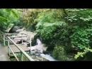 Апацха Ассир в ущелье. Абхазия. село Черниговка.