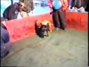 Andrej s Ch Zebo vs Buco