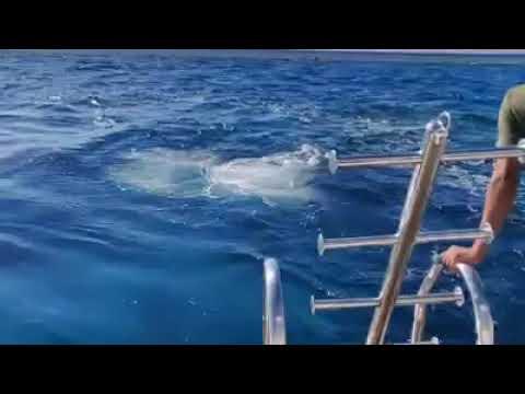 Drift dive jump