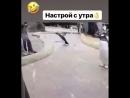 Танцы пингвина