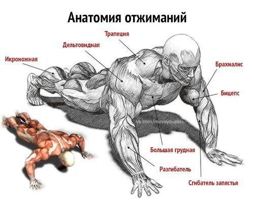 Болит плечо при отжиманиях от пола