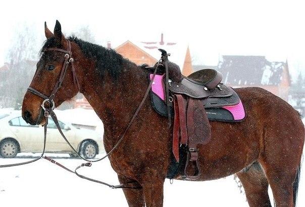 Фигурка лошади моя конюшня, коричневая, 325 см вконтакте