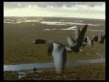 Перелтн птахи