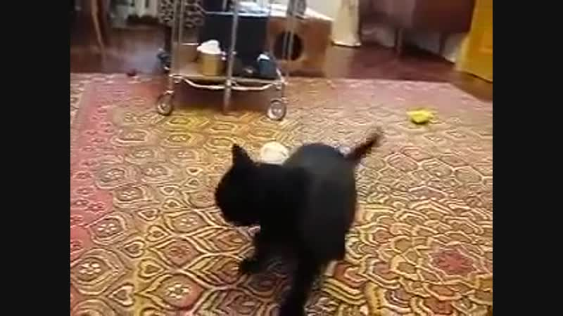 Cat plays with Crazy Weasel.mp4.mp4