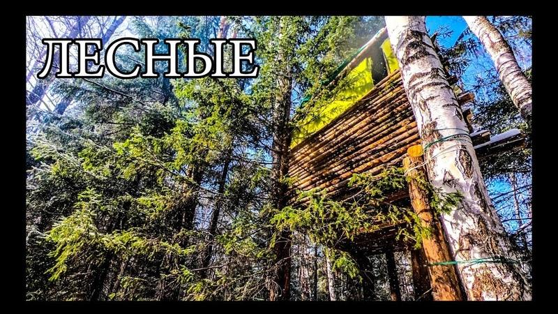 ДОМ НА ДЕРЕВЕ | УЛУЧШЕНИЯ И ОБУСТРОЙСТВО | BUSHCRAFT HOUSE on the TREE - UPGRADE - DIY