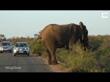 Elephant Caught In The Act Of Yoga_HD.mp4
