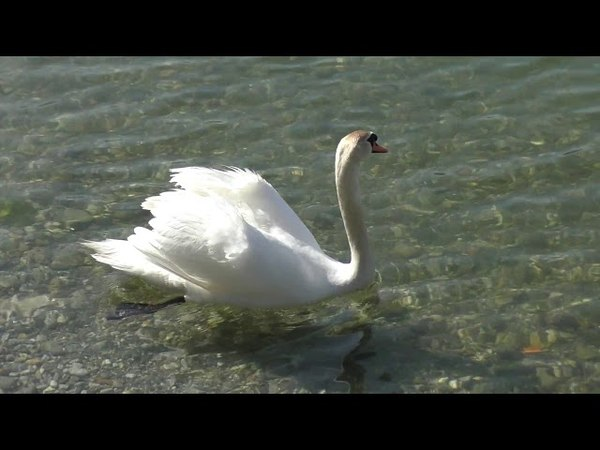 Sul lago un evp mentre registro