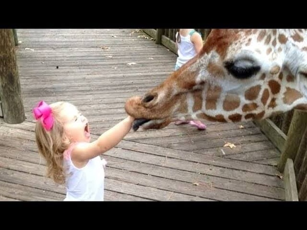 Video Lucu Bayi Anak Kecil di Kebun Binatang 1 2017