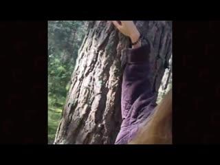 экскурсия по деревенскому лесу