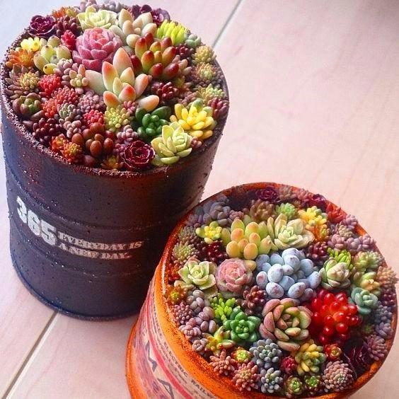 Семена суккулентов -