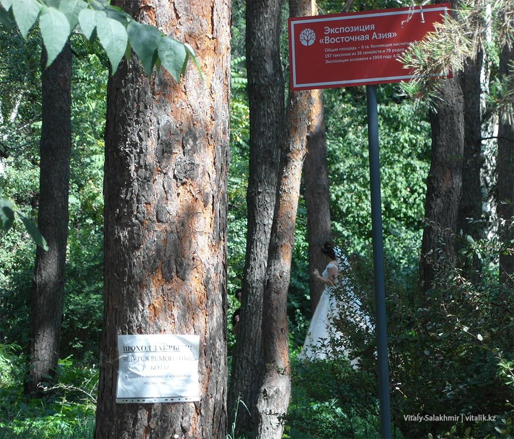 Экспозиция с соснами, Ботанический сад Алматы 2018