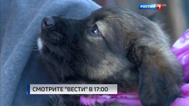 Вести. Эфир от 24.10.2016 (14:00)