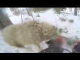 Сноубордист въехал в барана
