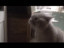 """Смеялись всей семьей!)) """"Открой мне!!"""", говорящий кот)"""
