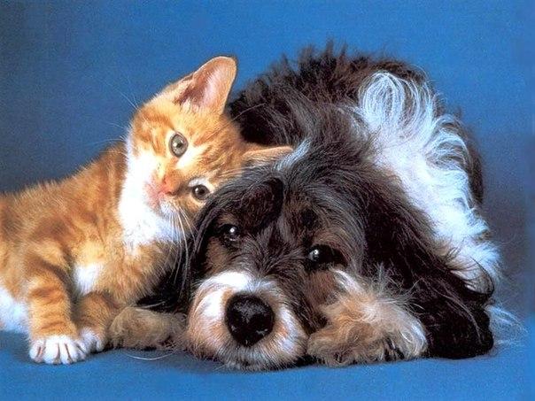 отмечалки с животными картинки: