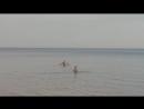 Папа с сыном купаются на ладоге
