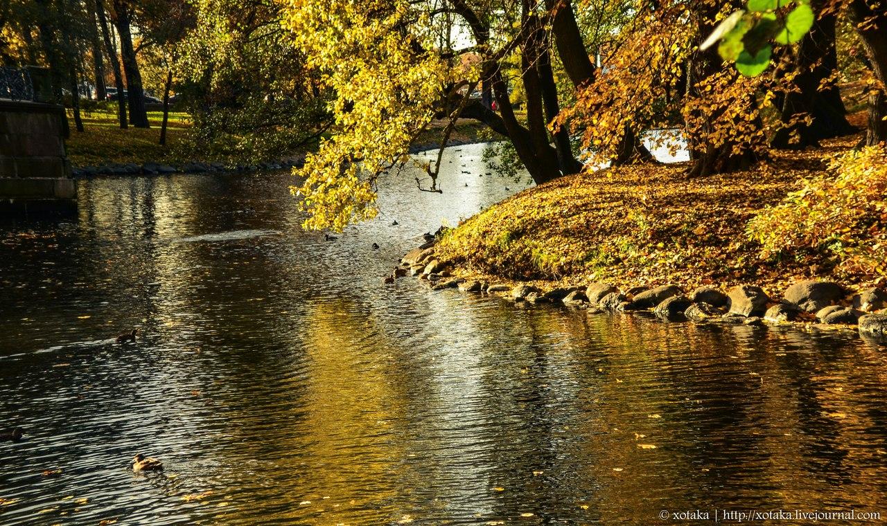 Лопухинский сад дача громова осень
