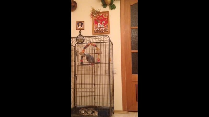 Бессовестный попугай