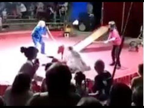 Под Волгоградом медведь напал на дрессировщика во время выступления в цирке