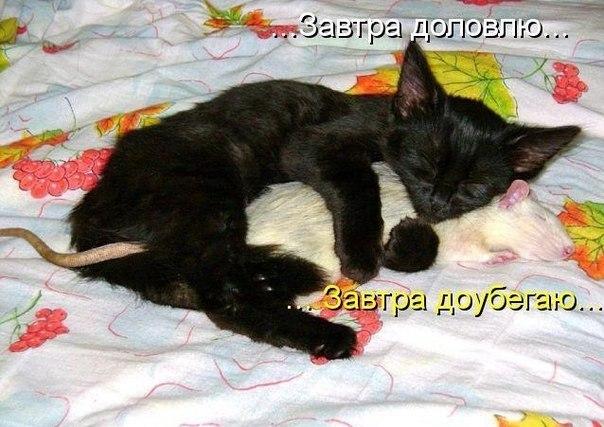 http://cs14109.vk.me/c310224/v310224447/4e43/pLLU14tjcrU.jpg