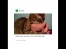 Кот сломался 480p.mp4