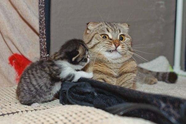 Картинки коты шалуны
